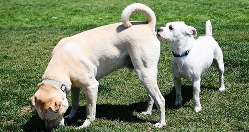 Expressing Dog Glands