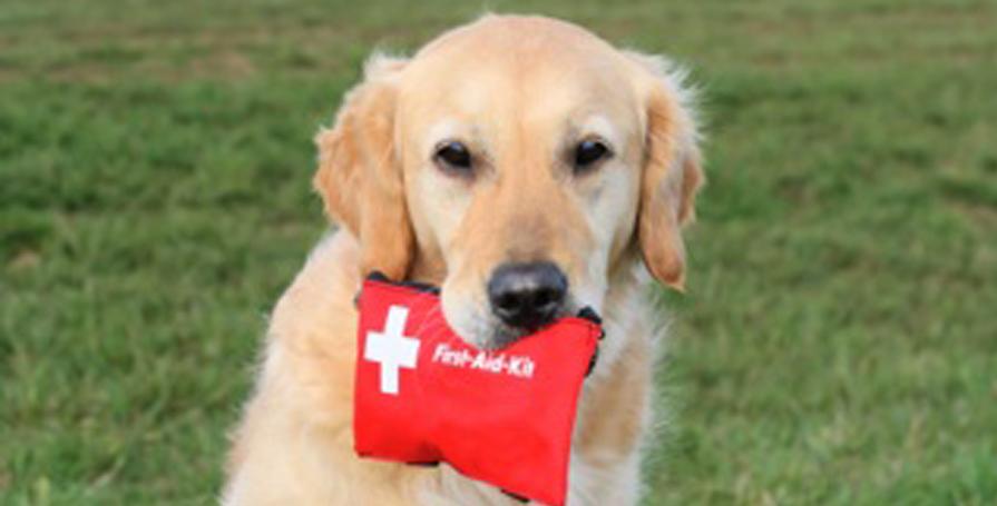 Dog First Aid