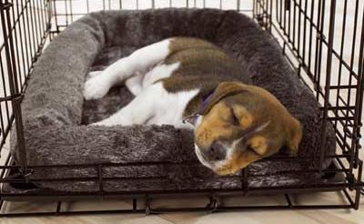 Crate Training Puppies