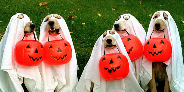 Top 10 Halloween Costume Ideas for Dogs & Top 10 Halloween Costume Ideas for Dogs | Dog Tag Art
