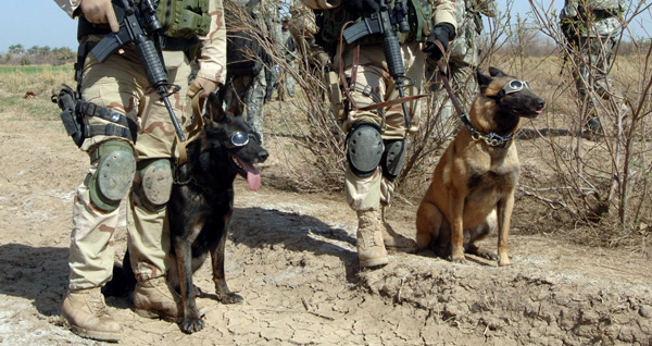 Working Military Dogs