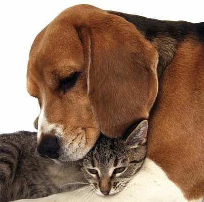 how to make a cat and a dog live together