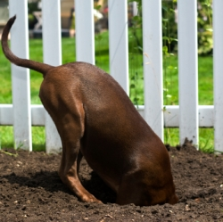Stop Dog Digging