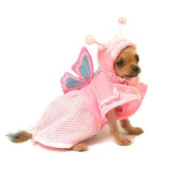 Dog Halloween Costume Butterfly