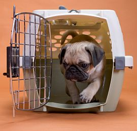 Training a puppy in a crate