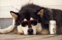 Sun Safety Tips for Pets