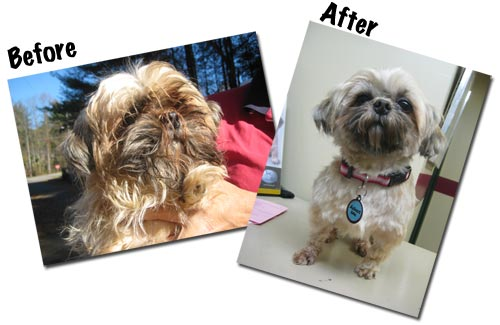 Image: Extreme Mutt Makeover for Gabby