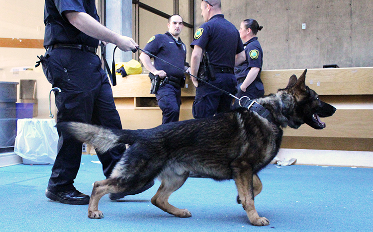 K9 Officer Boss Walking