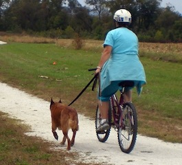 Image: Biking With A Dog