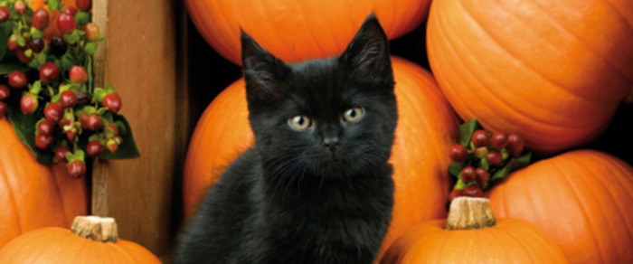 This Halloween, As You Carve Your Pumpkins, Don Your Yards With Cobwebs And  Fill Up Bowls Of Treats For The Tiny Two Legged Spooksters To Arrive, ...