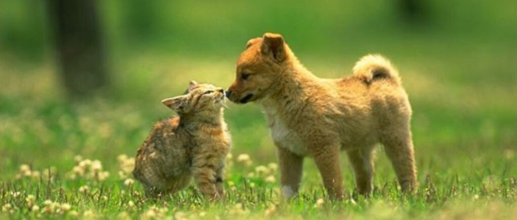 Dog and Cats Living Together , New Pet Tips