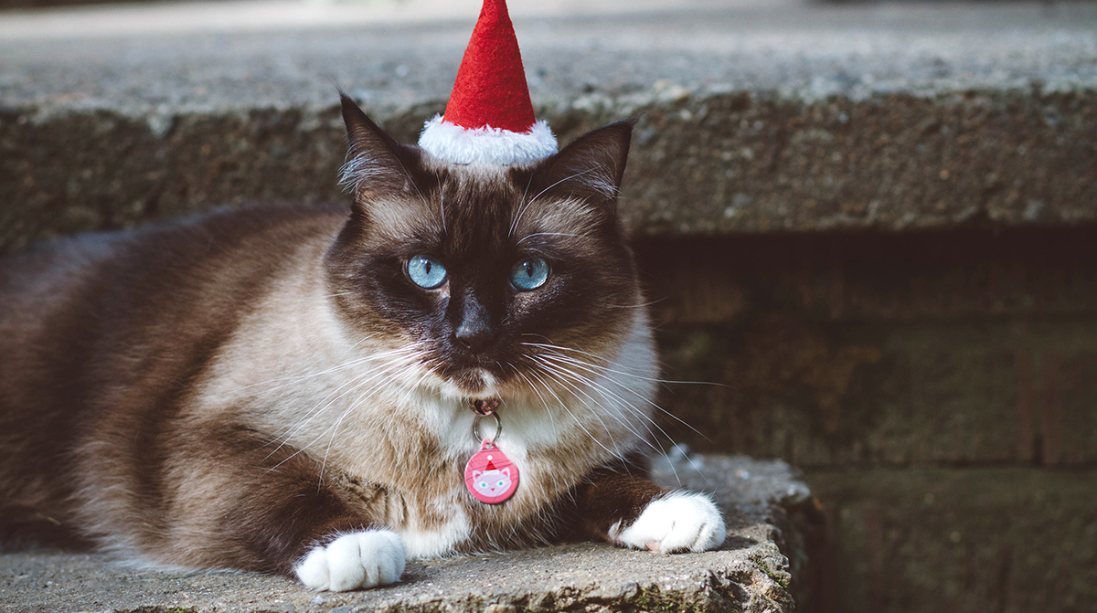 A Cat Proof Christmas Tree - Is it Possible?