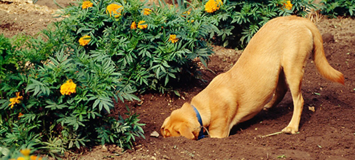 How to Keep Your Dog Out of The Garden