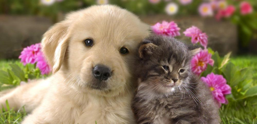 Are Dogs and Cats Really Enemies?
