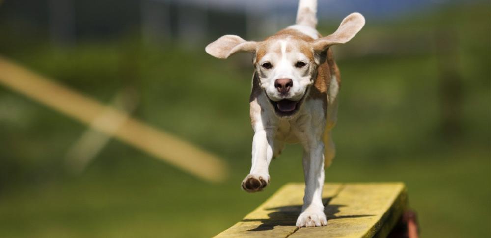 5 Amazing Dog Ear Facts