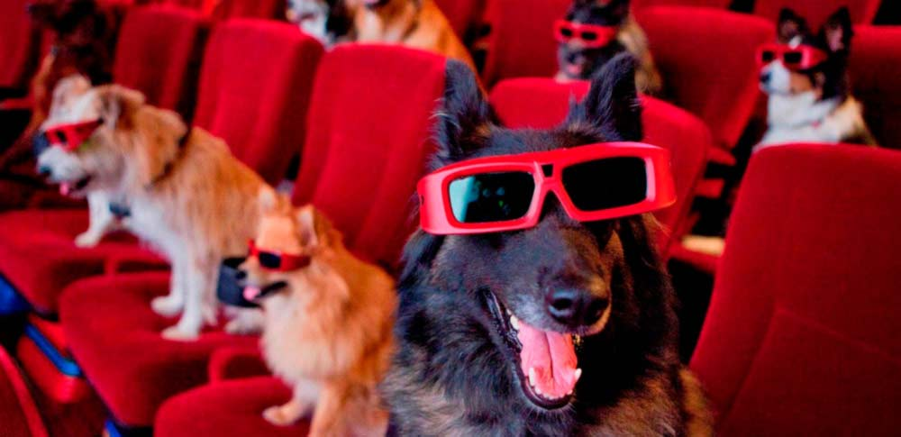 The 12 Best Dog Movies of All Time