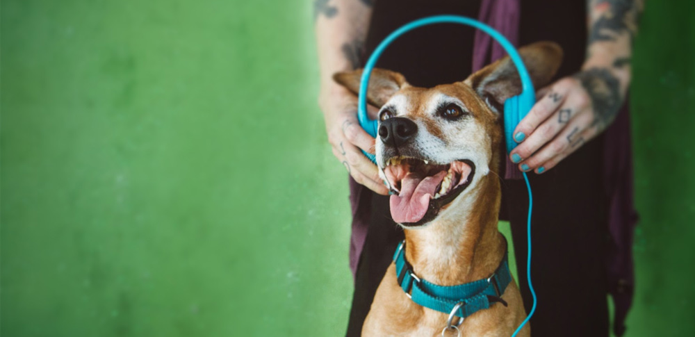 What Kind of Music do Dogs Like Best?