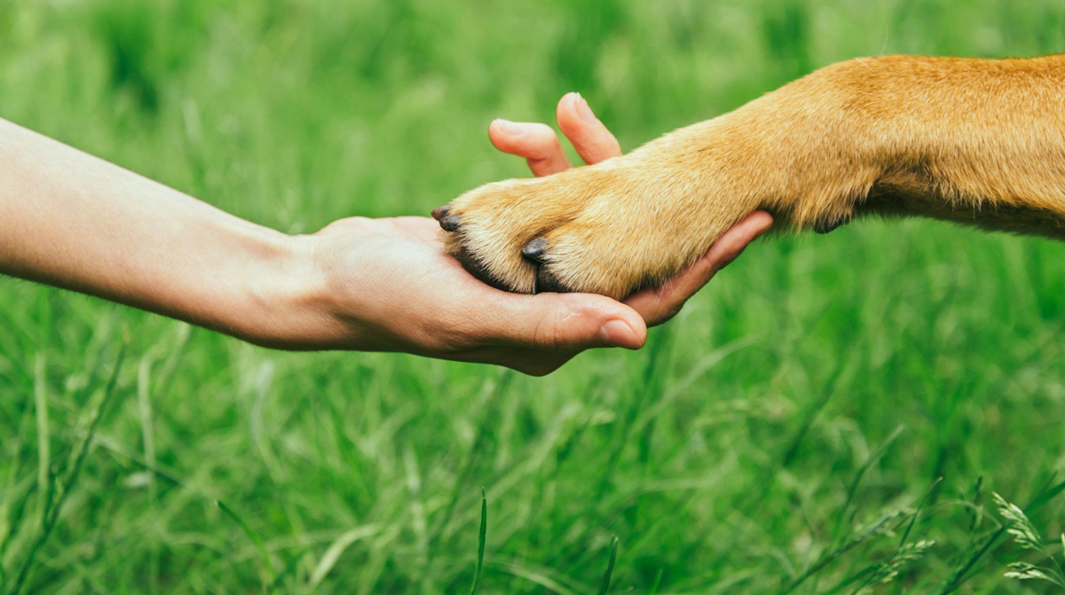 Going Green with Your Pet for Earth Day