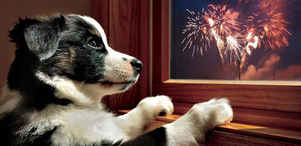 Why Dogs are Scared of Fireworks