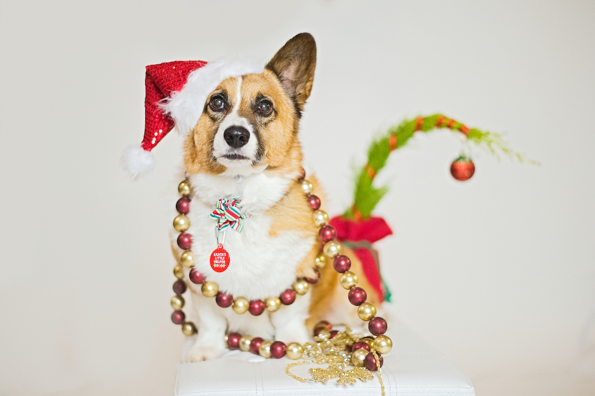 The Ultimutt 2020 Holiday Pet Lovers Gift Guide