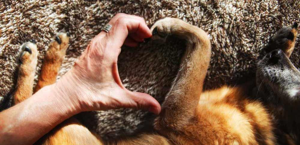 A Dog Tag Art Love Story