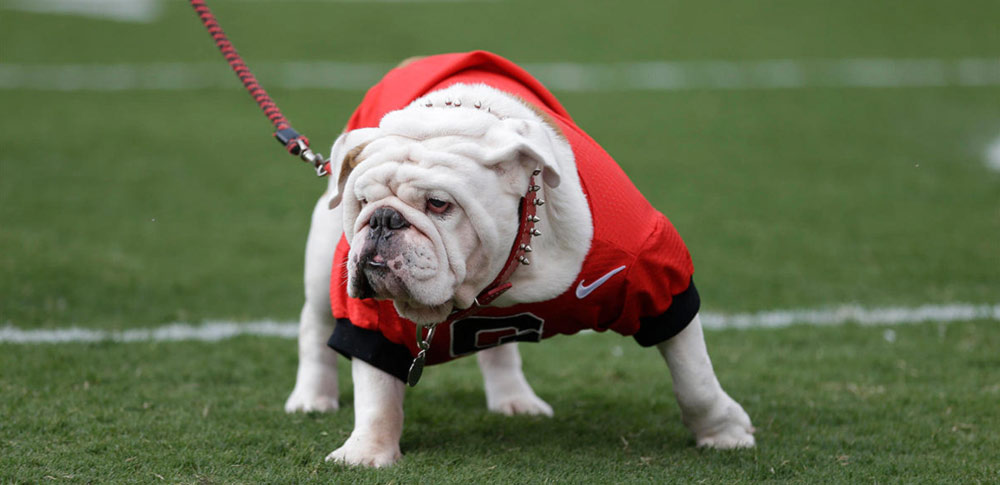 Canine Mascots of College Football