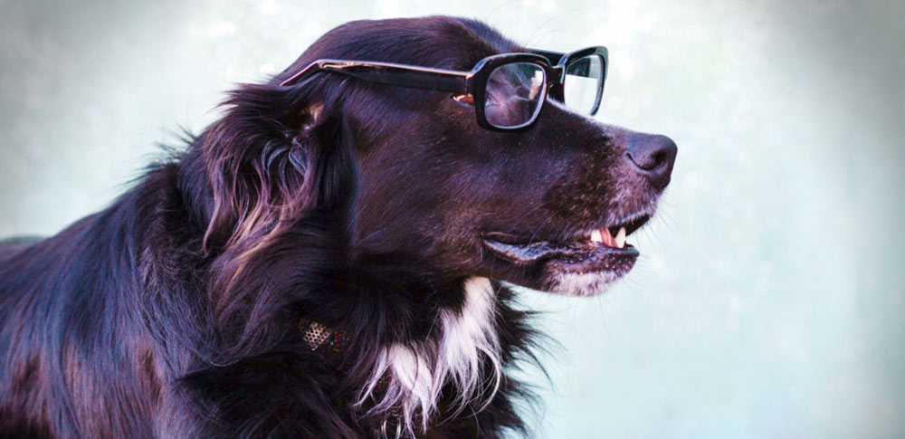 How Good is Your Dog's Memory?