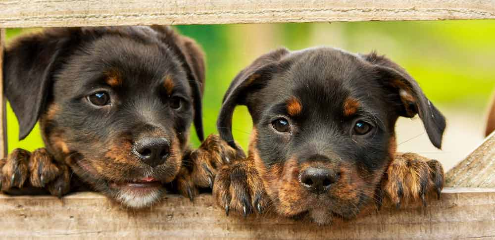 The Real Reason Puppies are so Darn Cute!