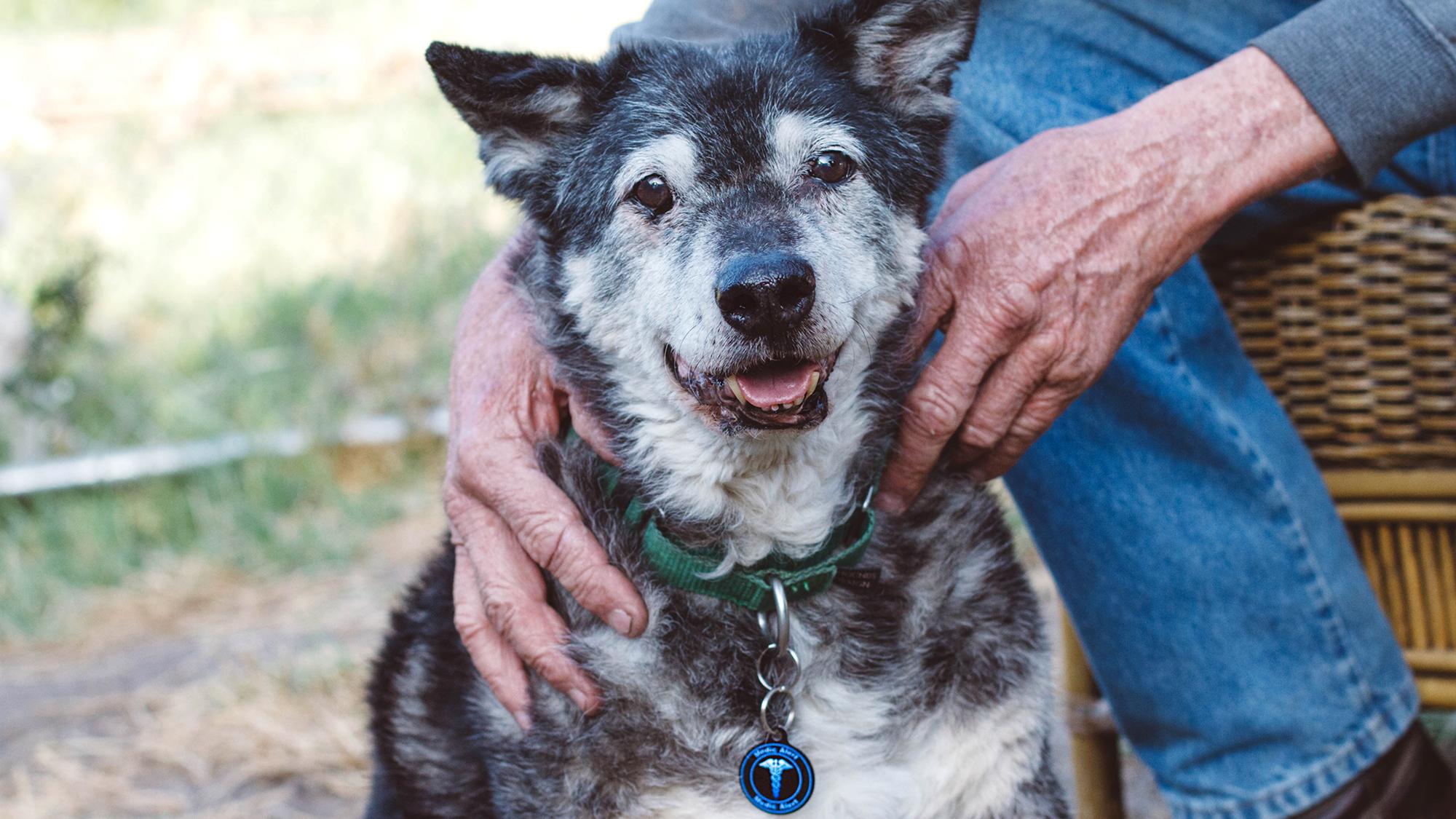 Love Has No Age Limit – Adopt a Senior Pet