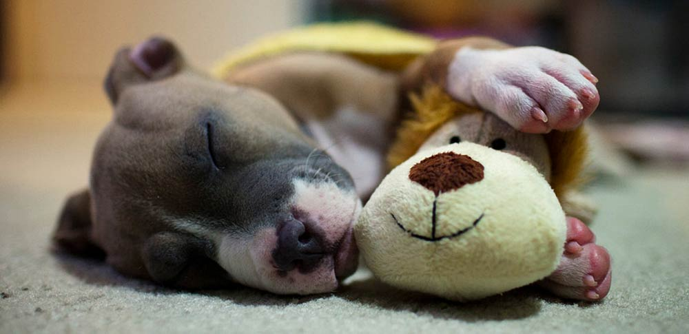 How Sleep Improves Dogs' Memory Function