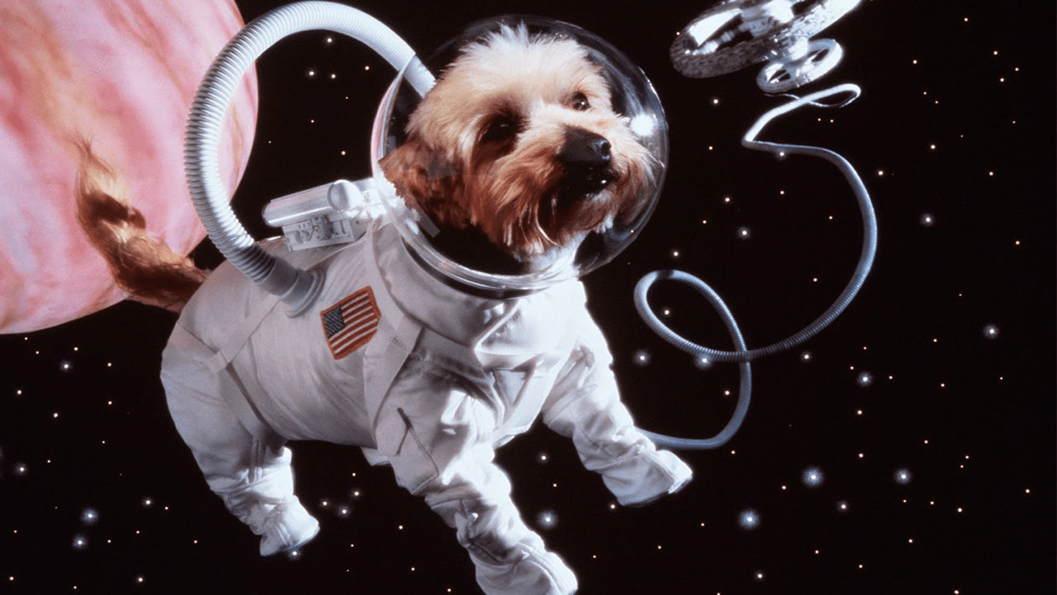 The Best Star Wars Names for Dogs