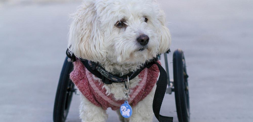 Should You Adopt a Special Needs Pet?