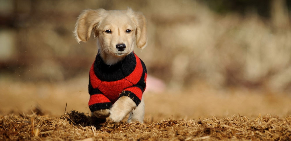Should Dogs Wear Clothes in Winter?