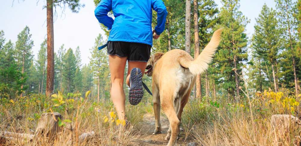 New Year's Resolutions for Animal Lovers