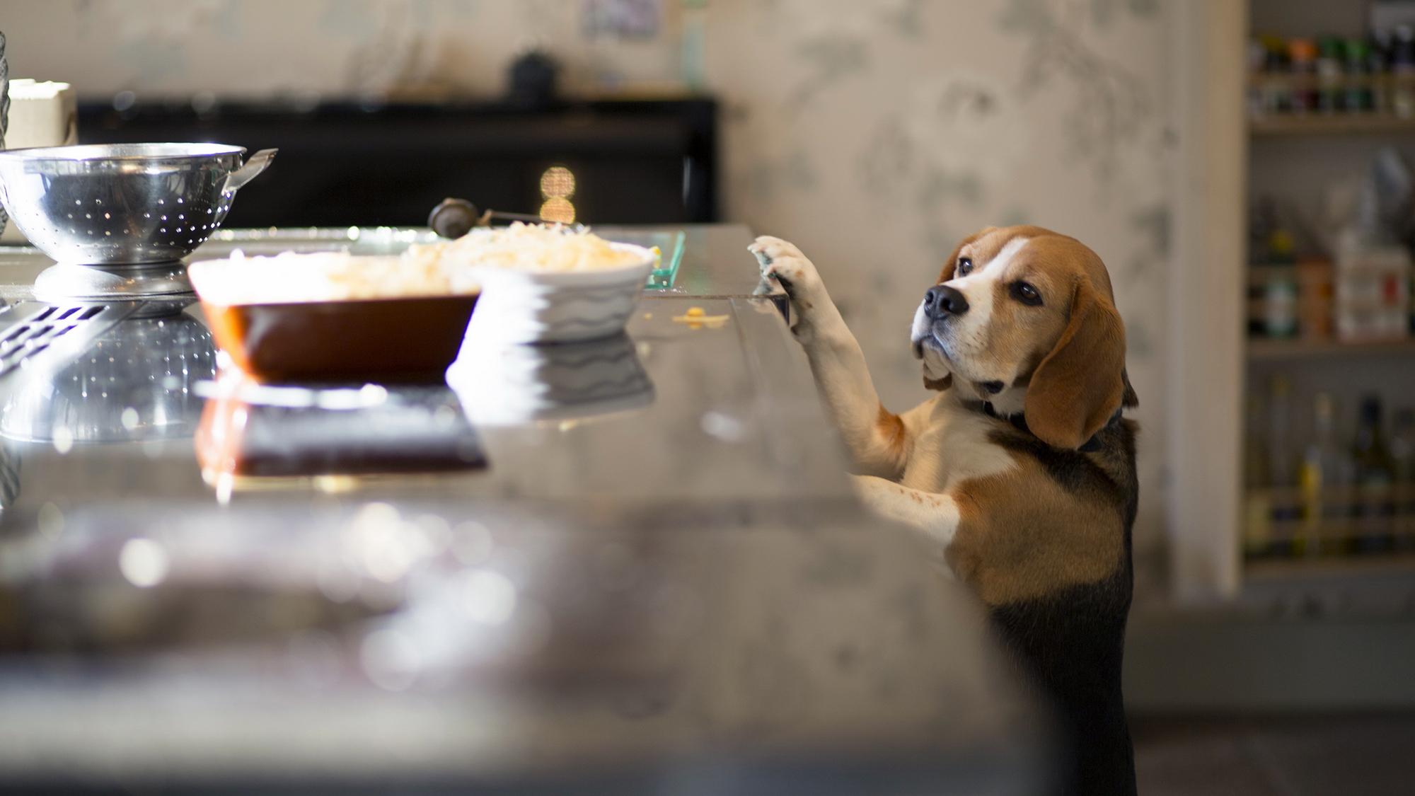 6 Thanksgiving Dog Treat Recipes