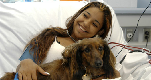 Hospital Therapy Dogs