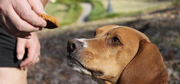 Dog Treats Healthy