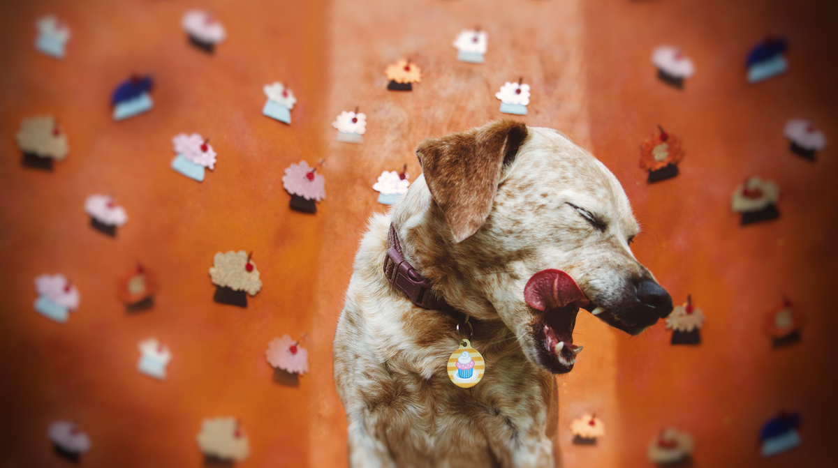 Make Your Own Dog Treats Worth Beggin' For