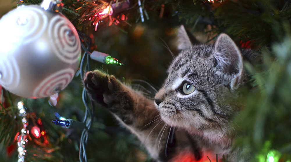 Embrace Your Cat's Curiosity