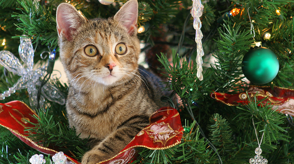 How to Cat proof your tree