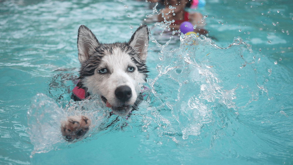 Derpy dog in water