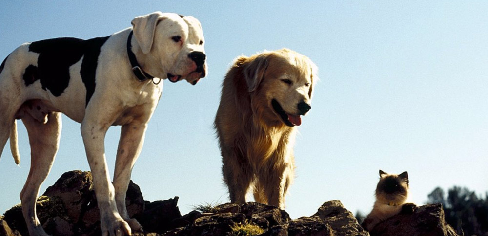 All Dogs Go To Heaven  Full Movie