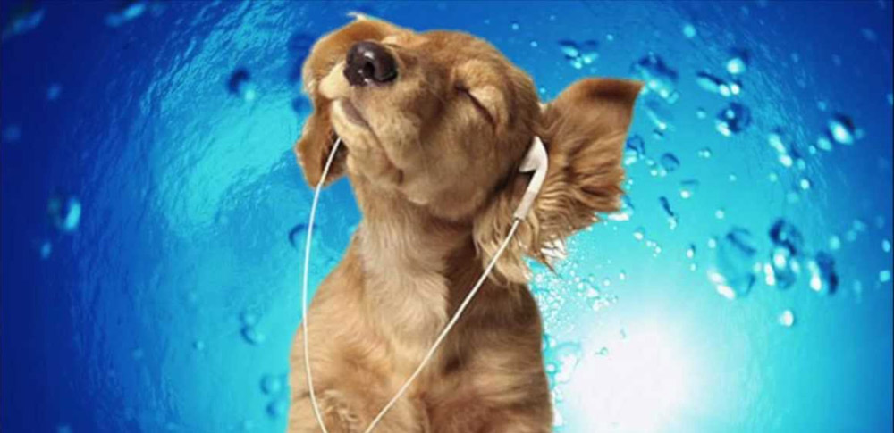 what type of music do dogs like