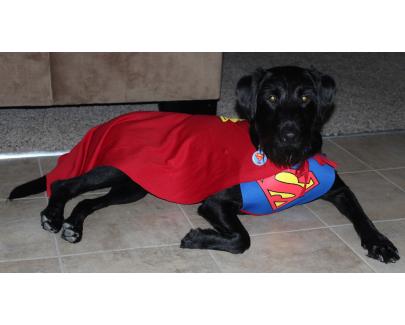 Super Baily!