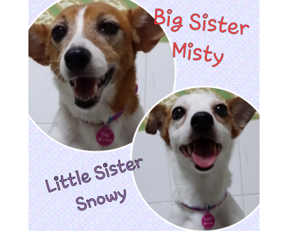Misty & Snowy