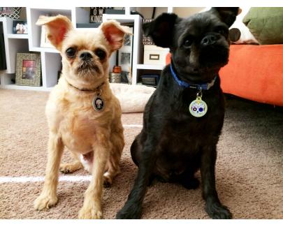 Bubba & Monkey