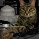 Kitty Heath