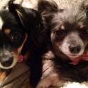 Gigi & Bonita