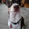 Coco Pups