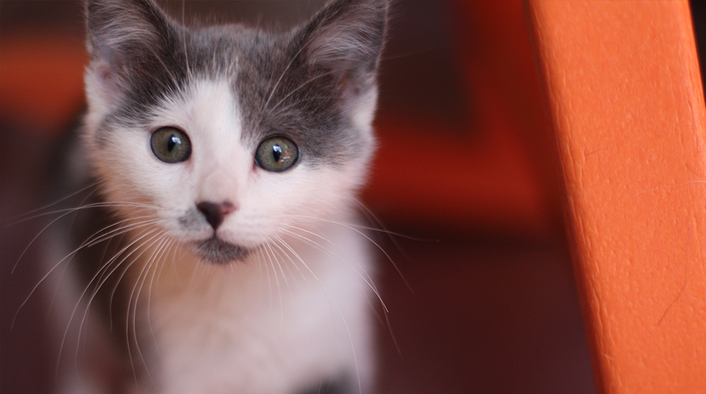 Kitten Blog 1
